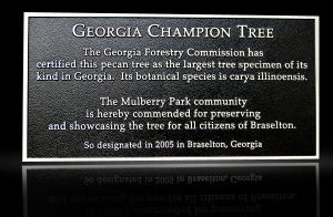 Cast Bronze Garden & Bench Plaque Champion Tree